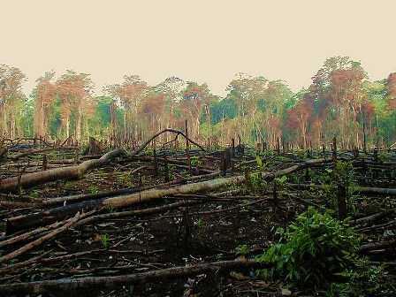 Depleting Forests-Sunita Narain-fnbworld