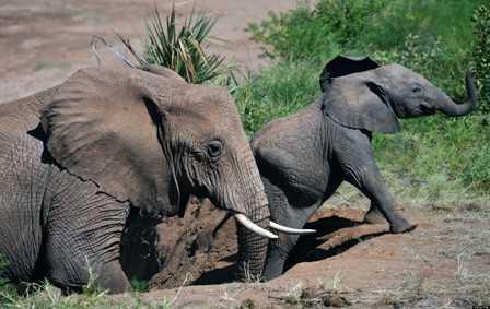 An elephant hunt trail
