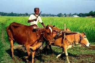 Farmer ploughingg fields-fnbworlda