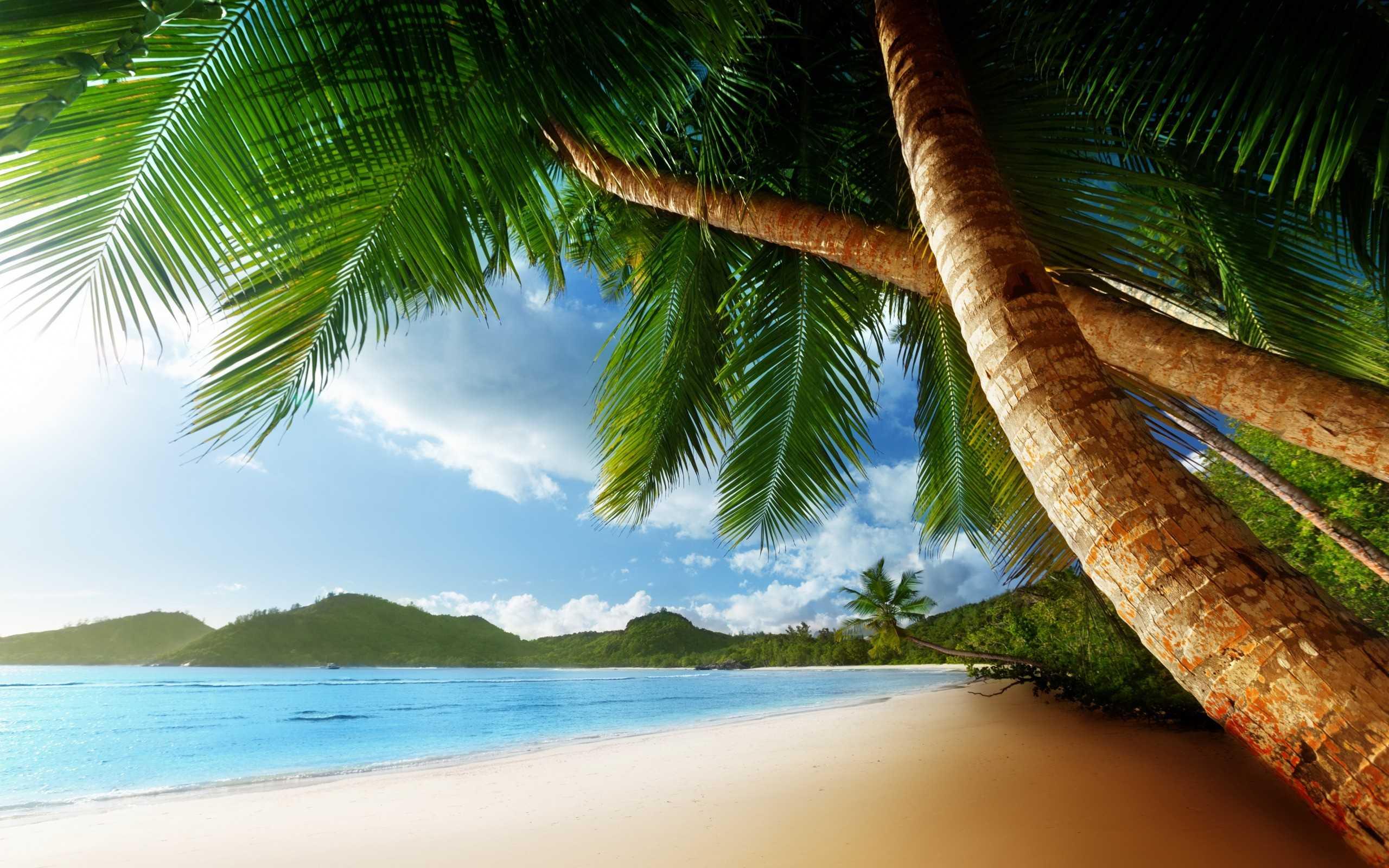Heavenly palm trees-fnbworld