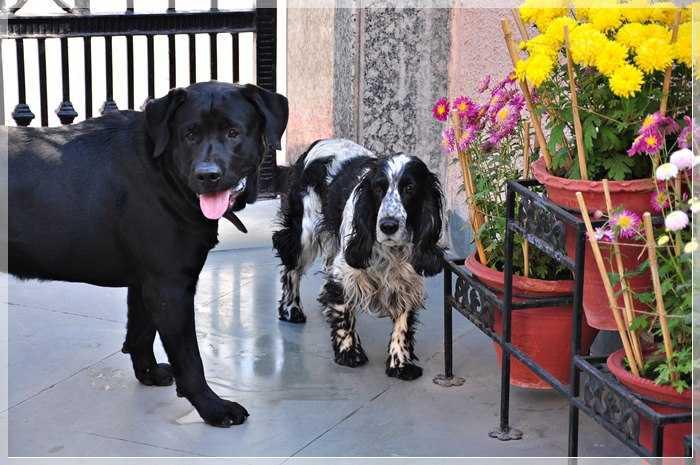 Pasha and Pepper- Oberois favourite pets-fnbworld