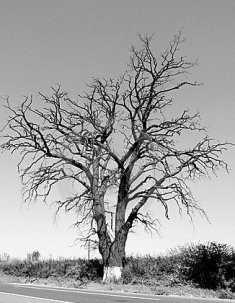 Famished tree-fnbworld