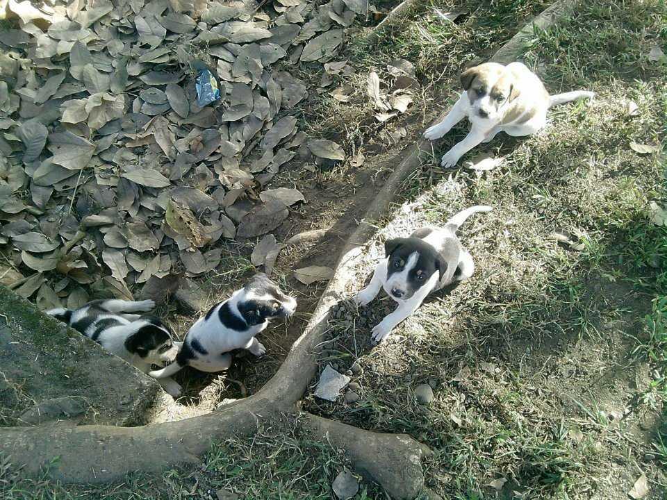 Lonely Puppies-Rumki Datta-fnbworld