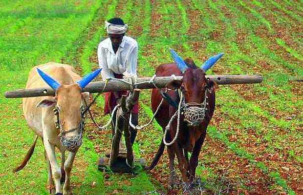 Farmers plight-fnbworld