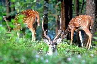 Dear Deers-fnbworld