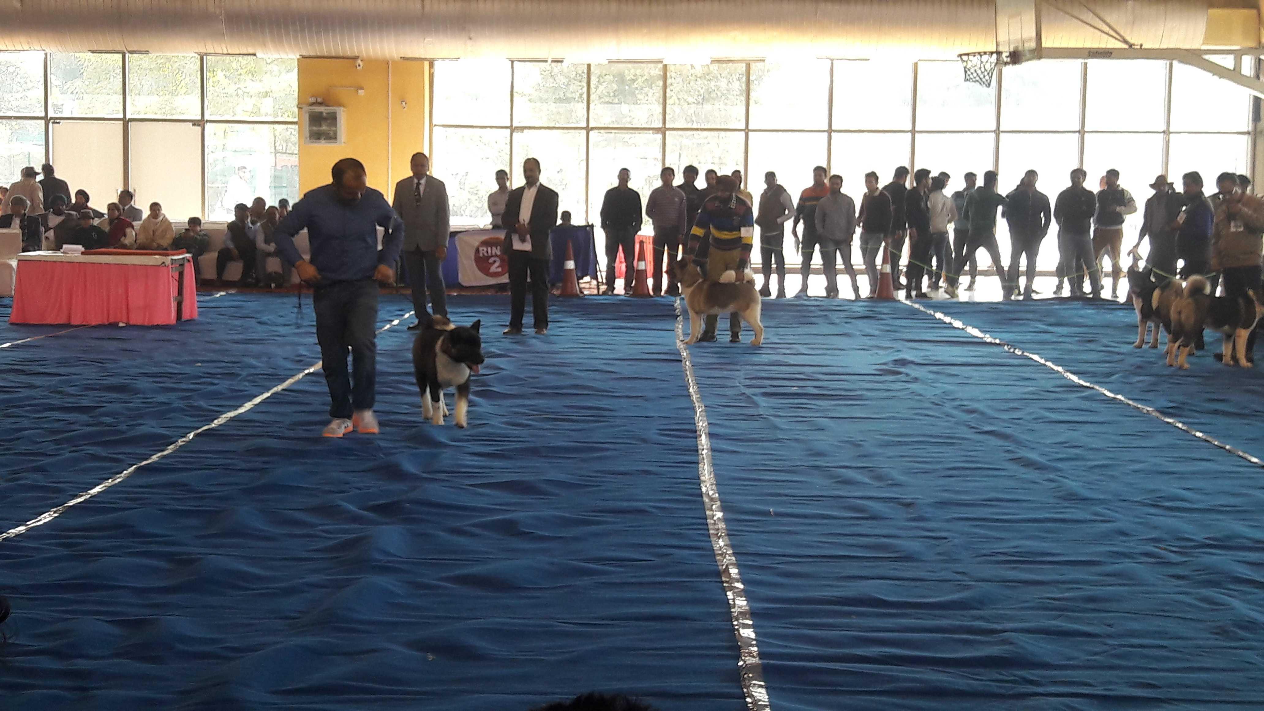 KCI dog show