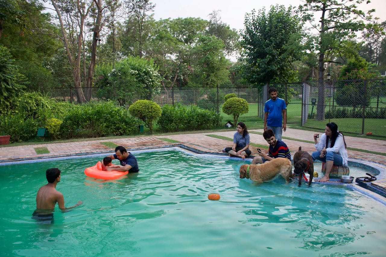 dogs in swimming pool-fnbworld-nazuk ahluwalia