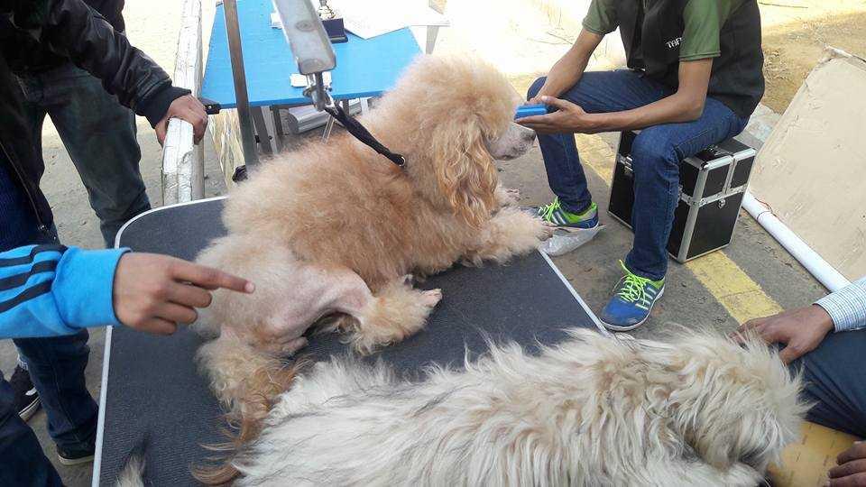 grooming the pet