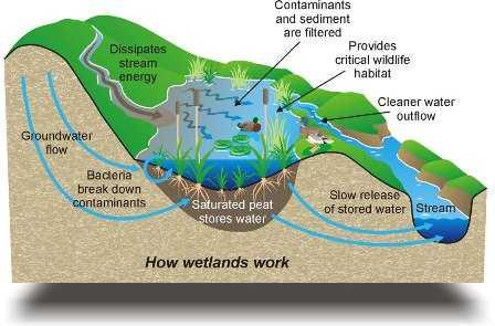 wetlands-sunita narain-fnbworld